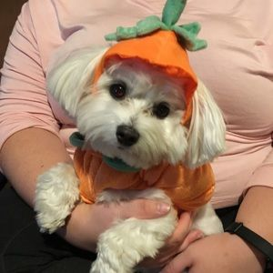 Adorable pet pumpkin costume. X-small never used